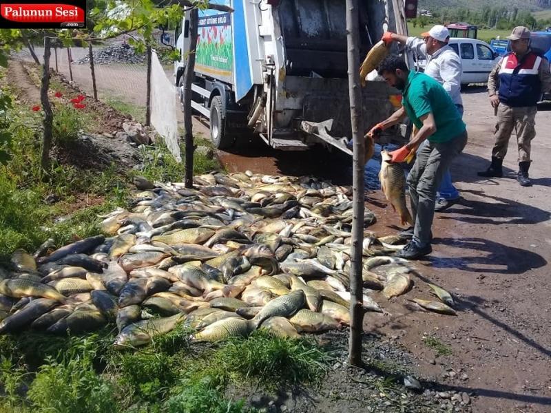 1200 Kg Kaçak Balığa El Konulup Çöpe Atıldı