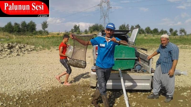 Baraj Gölüne 300 Bin Yavru Balık Suya Bırakıldı-VİDEO