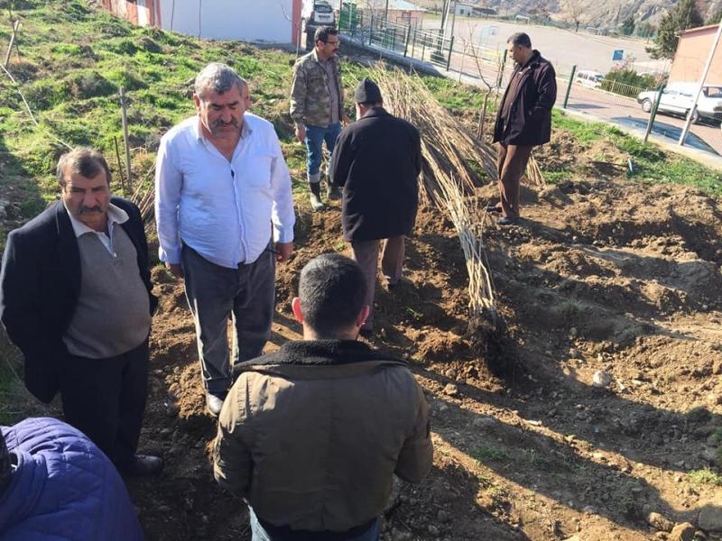 Çiftçilere 1120 Adet Trabzon Hurması Dağıtıldı