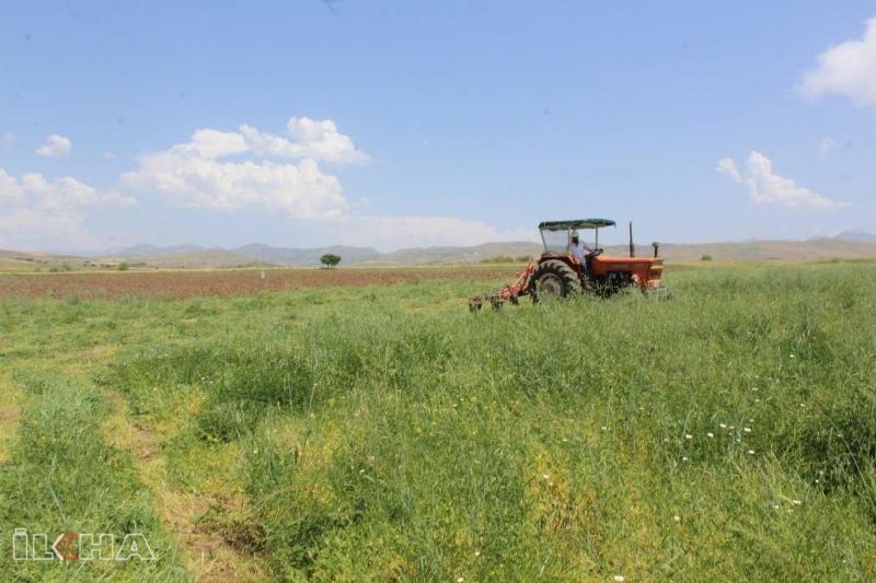 Kovancılar'da fiğ hasadı başladı-VİDEO