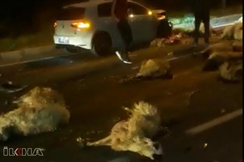 Yarış yapan otomobiller koyun sürüsüne daldı